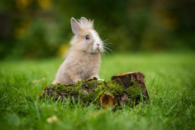 Kaninchen auf der Wiese