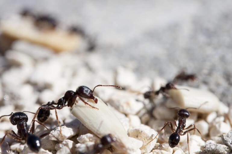 mehrere Ameisen